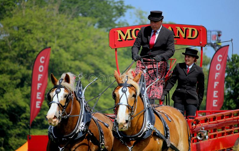Guildford, England - May 28 2018: Dray or open wooden wagon belonging to Morland Brewery, being pulled by two bay Shire horses in. Traditional leather tack royalty free stock photography