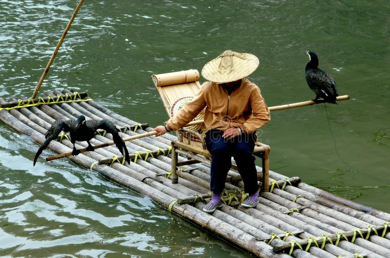 Guilin, China: Vrouw met Commorants stock afbeelding