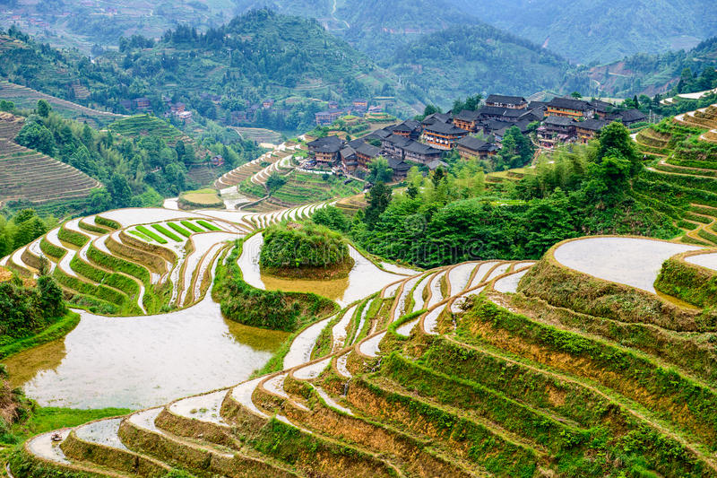 Guilin-Reis-Terrassen stockbilder