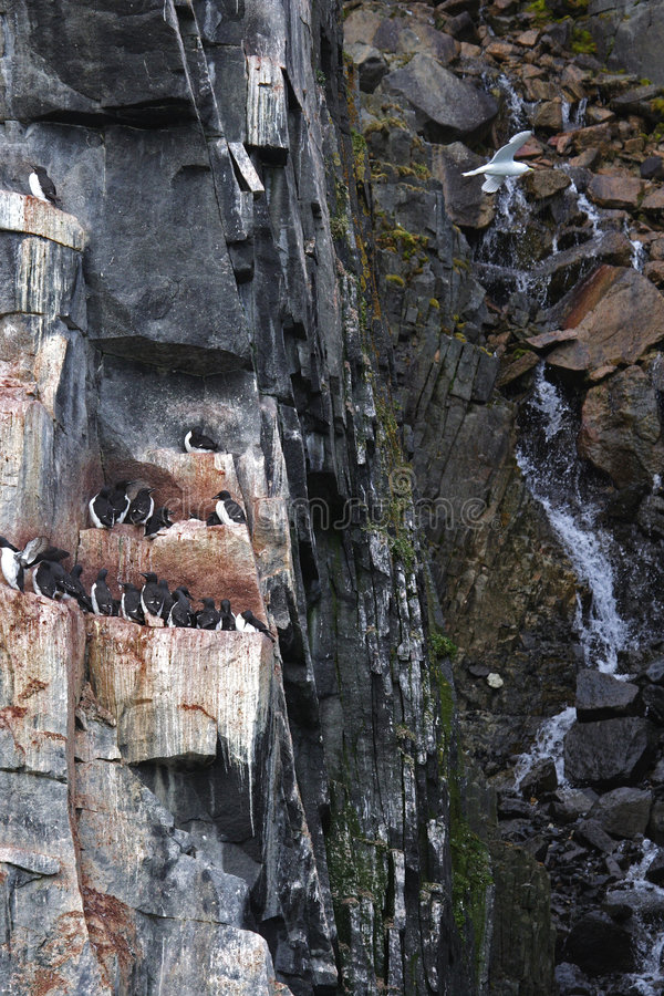 Guillemote Cliffs stock photo