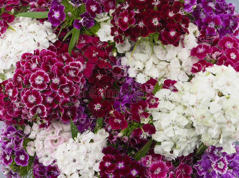 Guillermo dulce colorido florece el ramo fotos de archivo libres de regalías