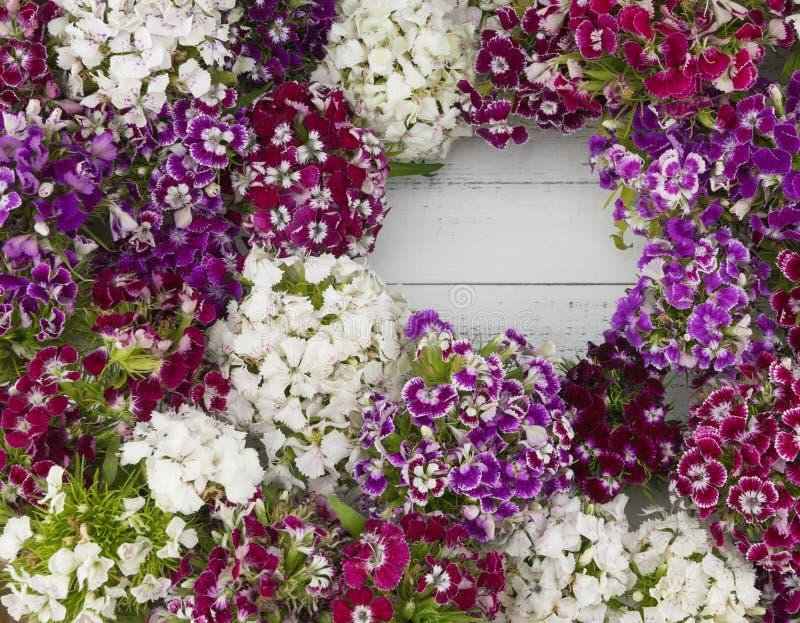 Guillermo dulce florece el fondo imágenes de archivo libres de regalías