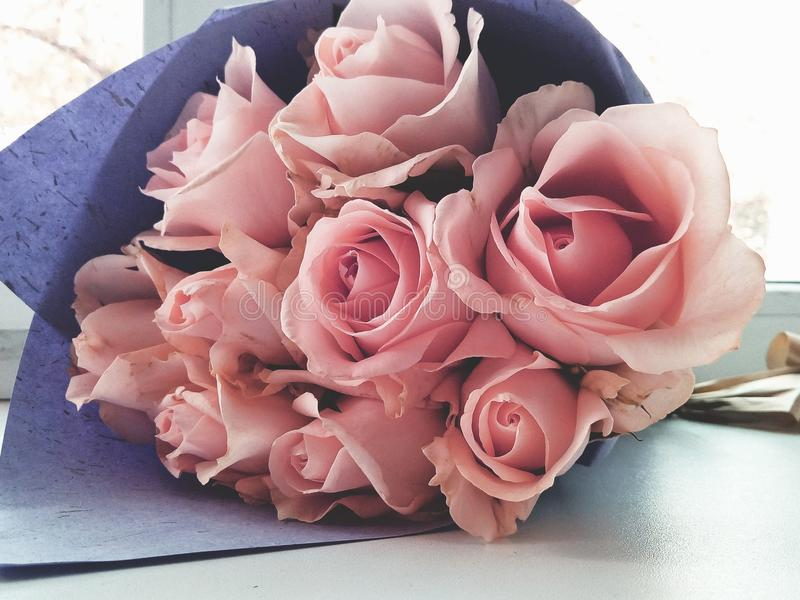 Guimauves roses photo libre de droits
