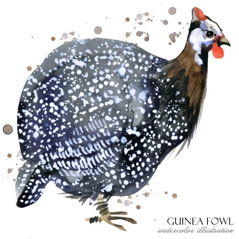 Guinae Fouwl het wilde naadloze patroon van de vogelwaterverf stock illustratie