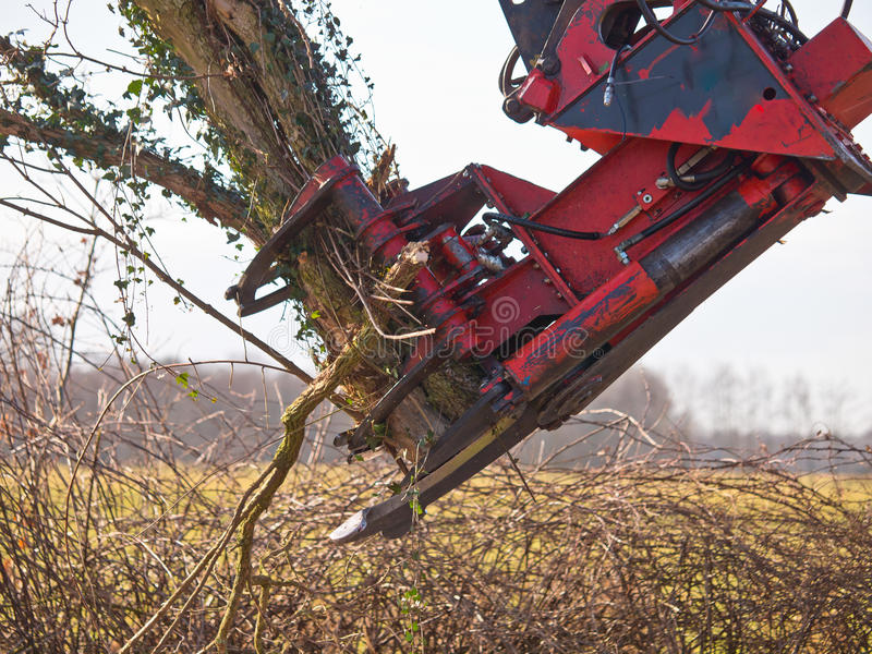 Guindaste do corte da árvore na ação foto de stock royalty free