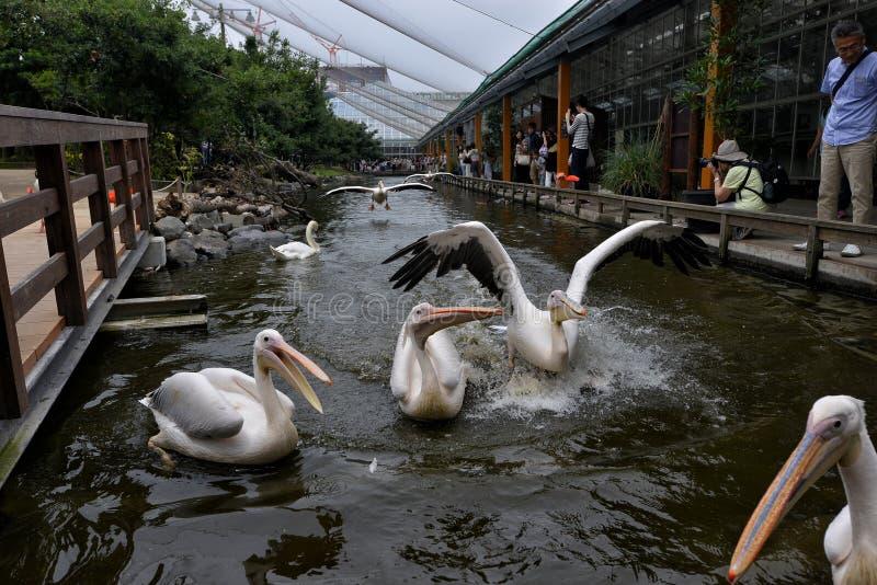 Guindastes do parque do jardim zoológico fotos de stock royalty free