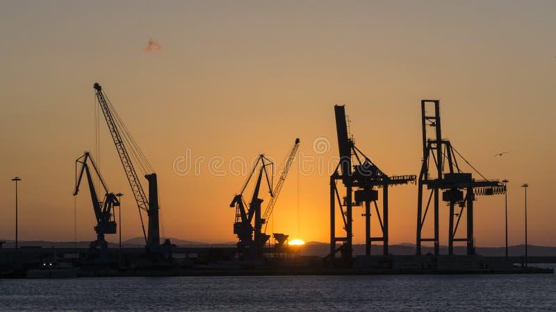 Guindastes na luz do por do sol fotografia de stock royalty free