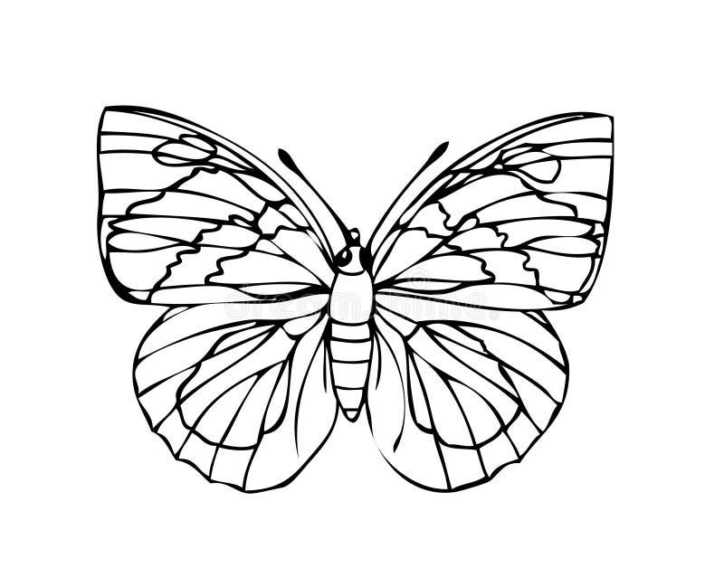 Guindineau illustration stock