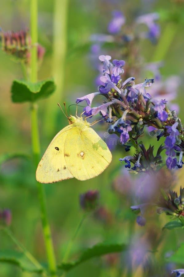 Papillon Photos Gratuites