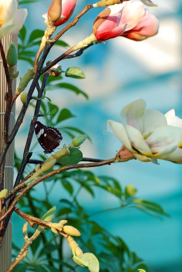 Guindineau et fleurs photo stock