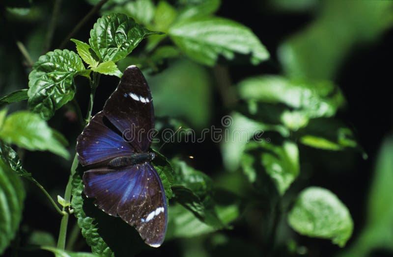 Download Guindineau et lames photo stock. Image du papillons, invertébrés - 51828
