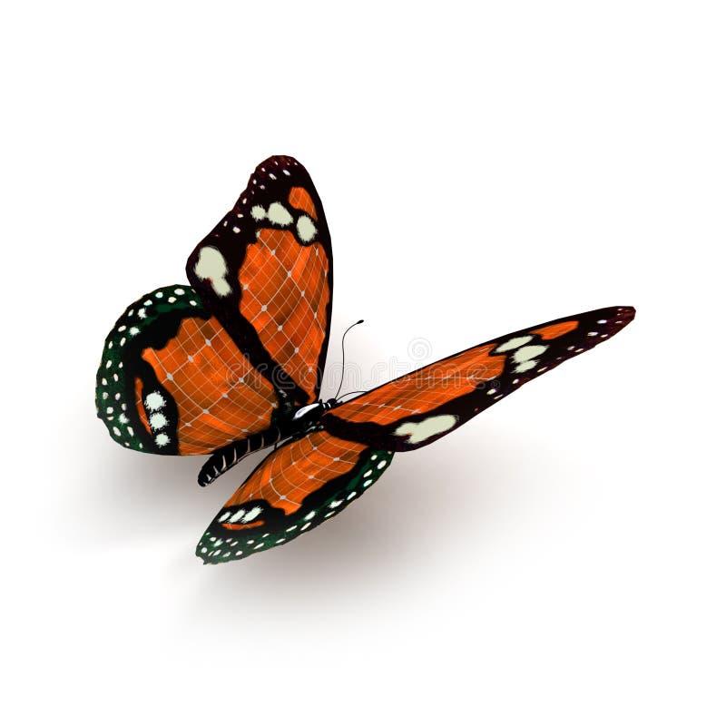 Guindineau orange illustration libre de droits