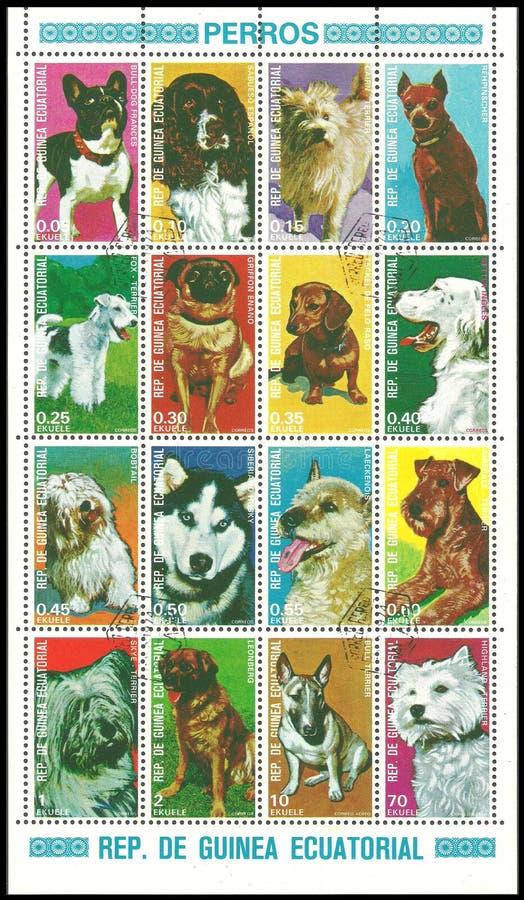 Guinea äquatorial, Hunde lizenzfreie stockfotos