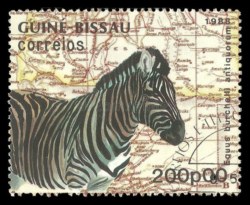 Fauna, Damara Zebra stock photos