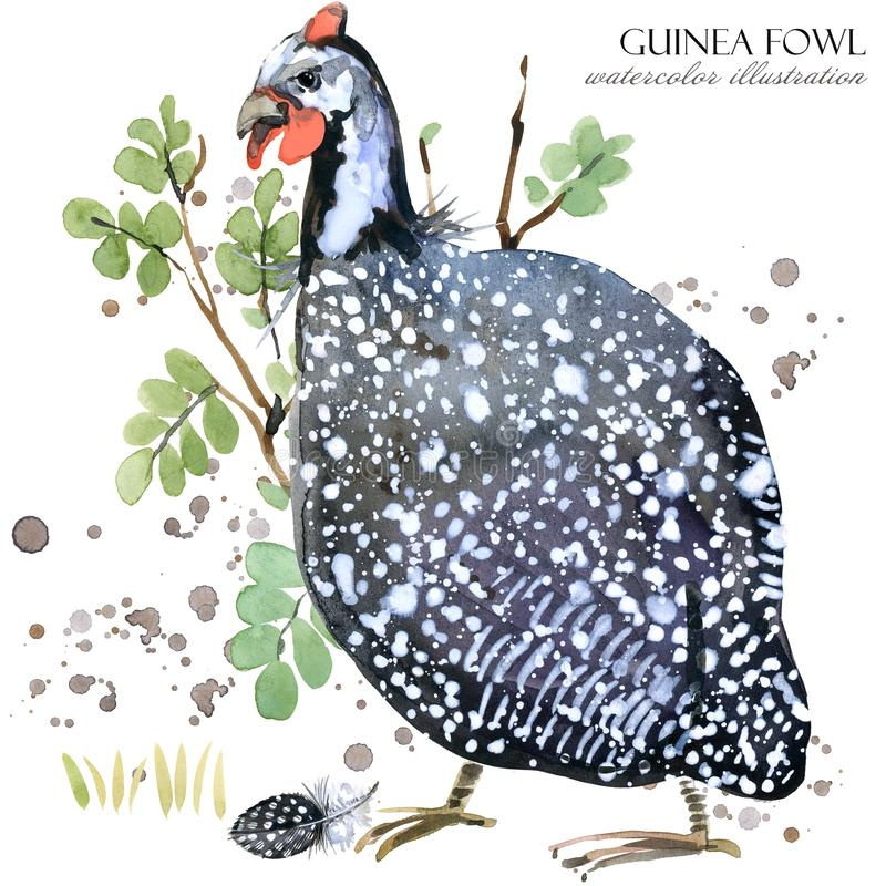Free Guinea Fowl. Wild Bird Watercolor Seamless Pattern. Royalty Free Stock Photography - 108838947