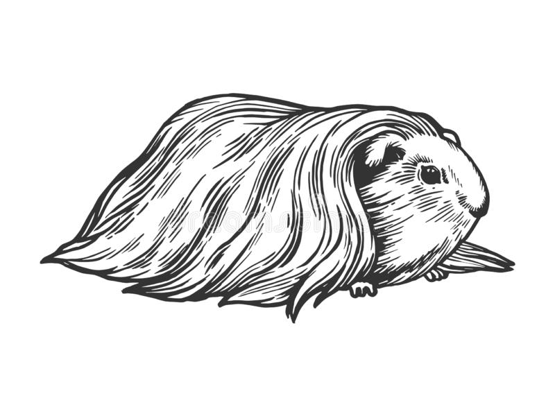 Guinea pig cavy animal engraving vector. Illustration. Scratch board style imitation. Black and white hand drawn image stock illustration