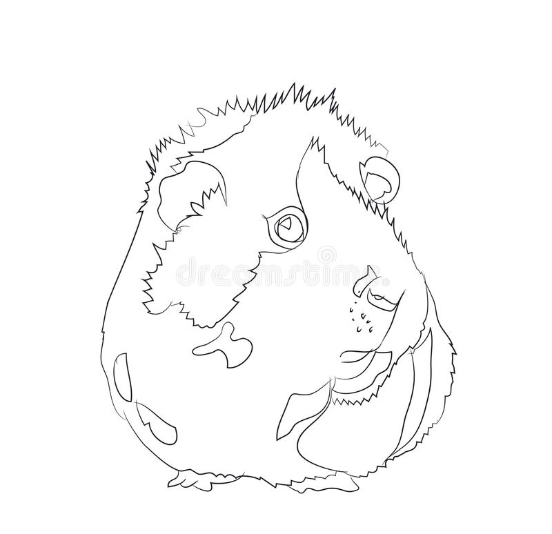 Guinea pig, lines, vector stock photography
