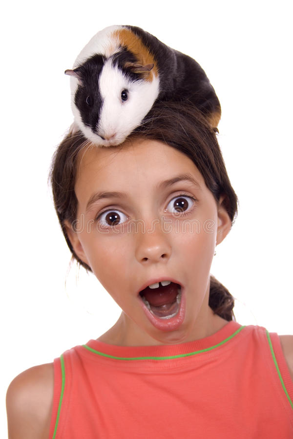 Guinea pig on my head! royalty free stock photo