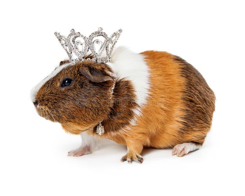 Guinea Pig Wearing Crown stock image