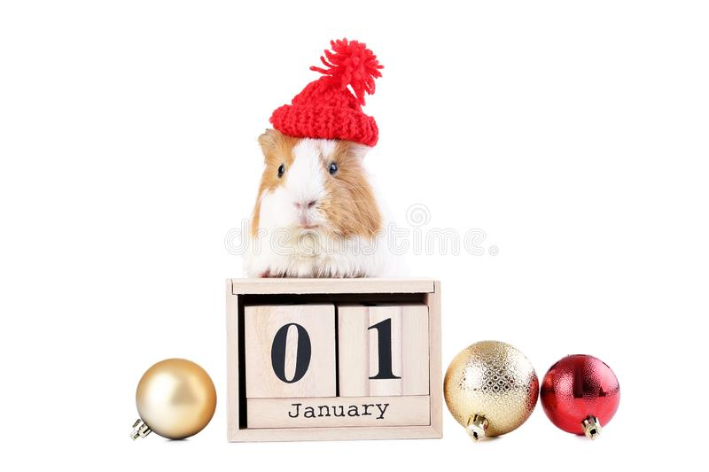 Guinea pig with wooden cubes and baubles stock images