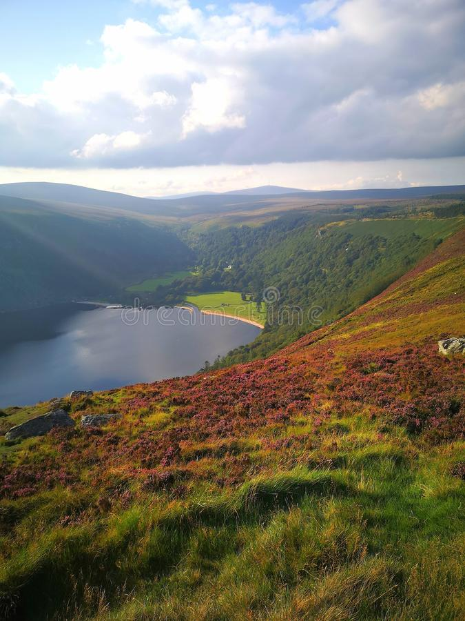 Guinness Lake, Wicklow Mountains, Ireland, Nature, Flowers, Sunny Day, Blue Sky, Sun stock photography