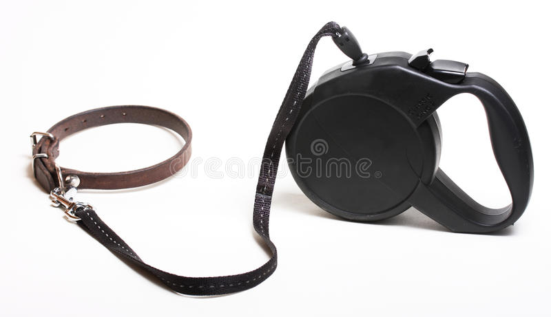 Guinzaglio del cane fotografia stock libera da diritti