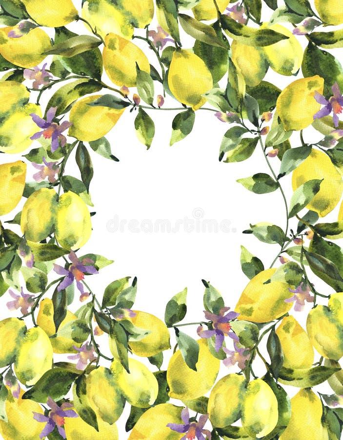 Guirlande d'aquarelle avec la branche du citron frais d'agrumes, des feuilles vertes et des fleurs illustration de vecteur