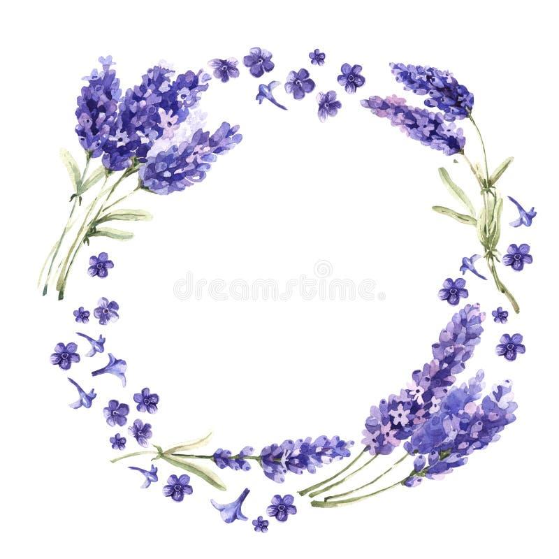 Guirlande de fleur de lavande de Wildflower dans un style d'aquarelle d'isolement illustration libre de droits