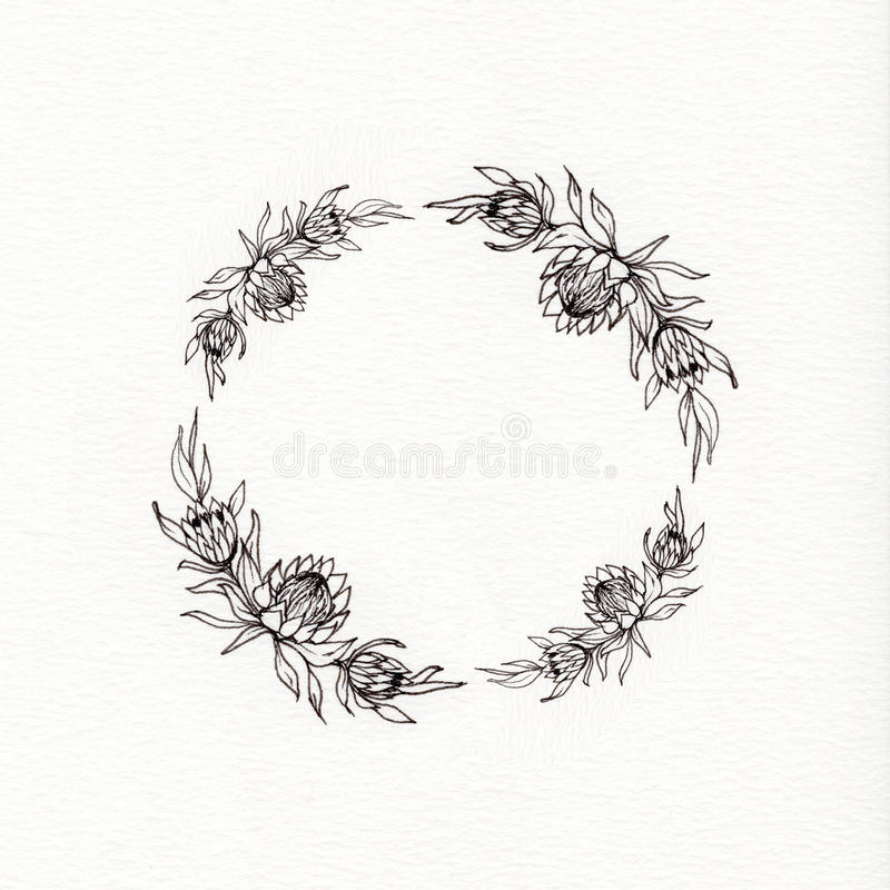 Guirlande de fleur de Protea photographie stock libre de droits