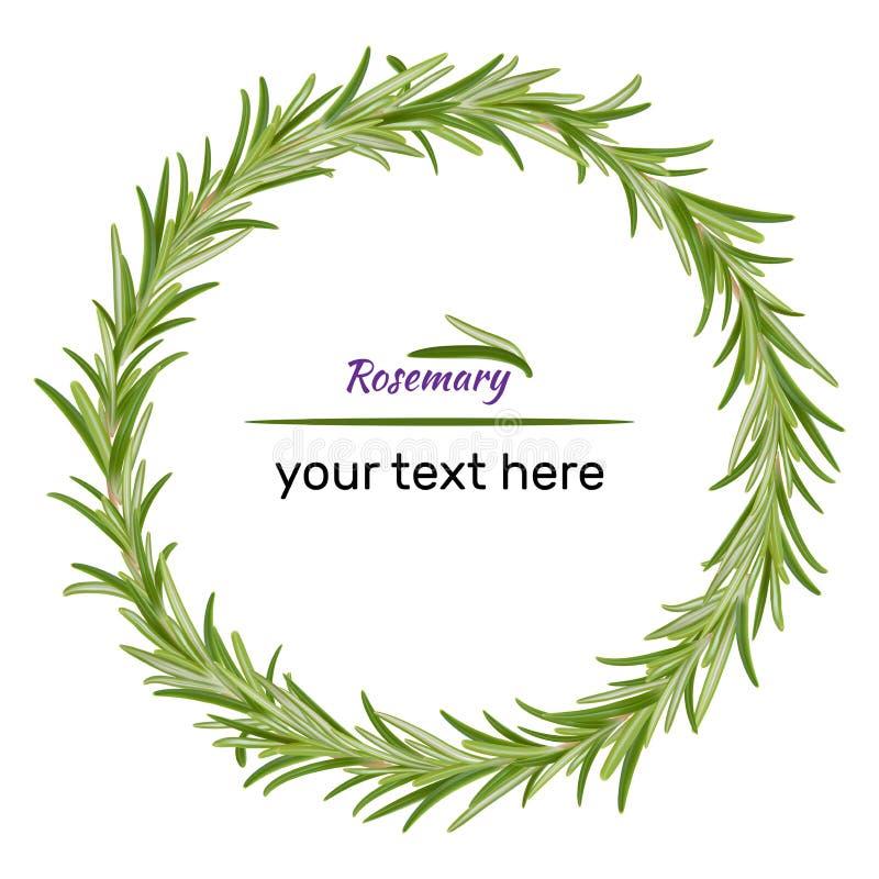 Guirlande des branches de romarin illustration de vecteur des herbes illustration libre de droits