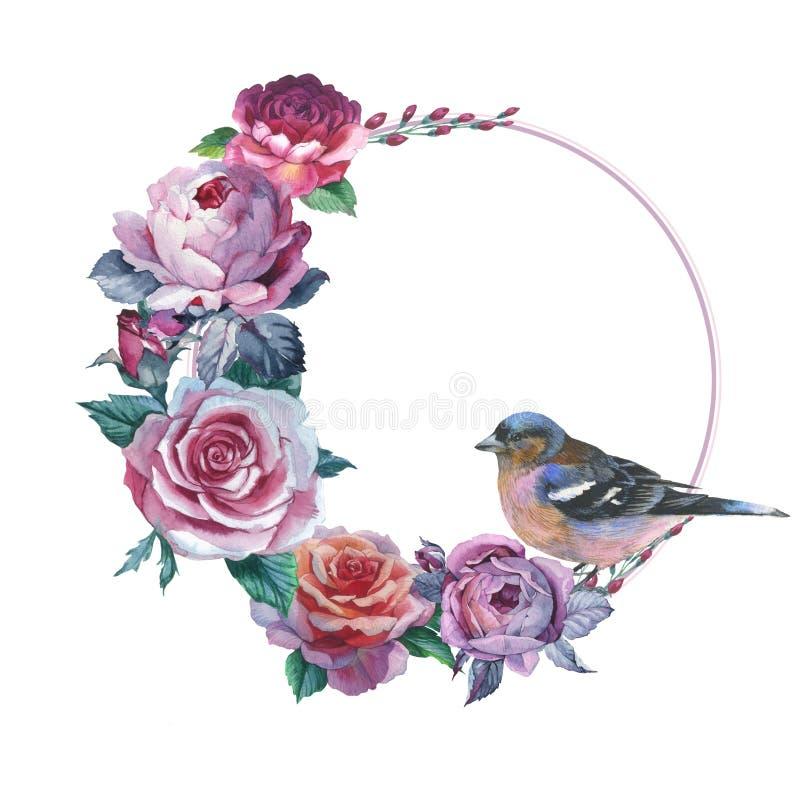 Guirnalda color de rosa de la flor del Wildflower en un estilo de la acuarela aislada ilustración del vector