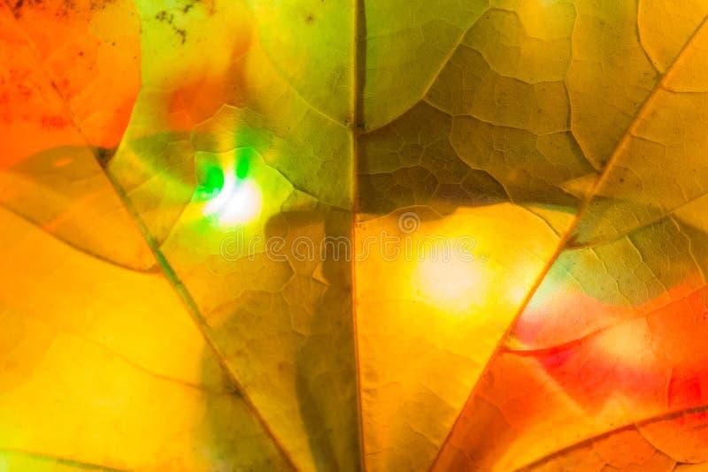 guirnalda colorida de la hoja imagen de archivo