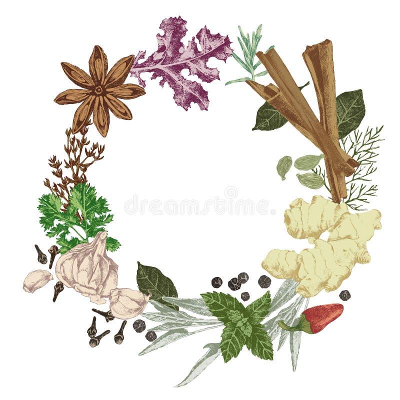 Guirnalda con las hierbas y las especias dibujadas mano ilustración del vector