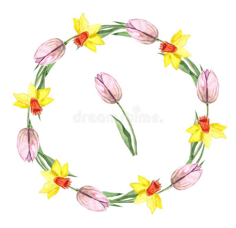 Guirnalda de la acuarela con las flores de la primavera: tulipán y narciso ilustración del vector