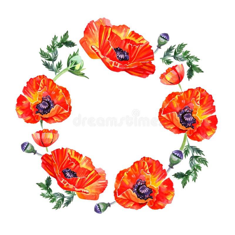 Guirnalda de la flor de la amapola del Wildflower en estilo de la acuarela aislada Fondo, textura, modelo de la envoltura, marco  stock de ilustración