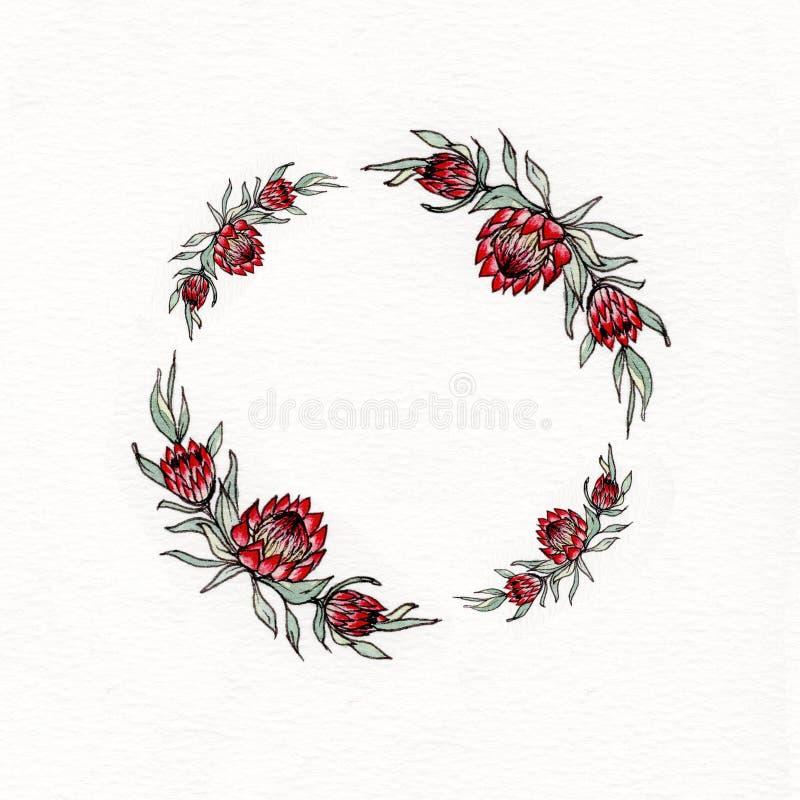 Guirnalda de la flor del protea de la acuarela ilustración del vector