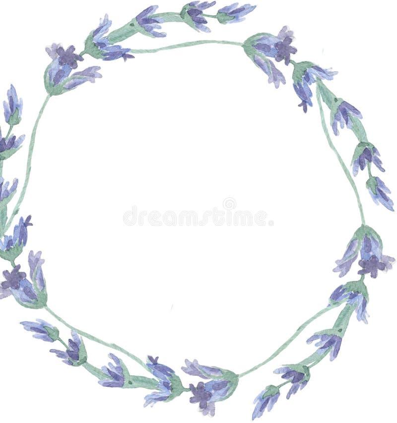 Guirnalda de la flor de la lavanda del Wildflower en un estilo de la acuarela aislada Nombre completo de la planta: lavanda Acuar stock de ilustración