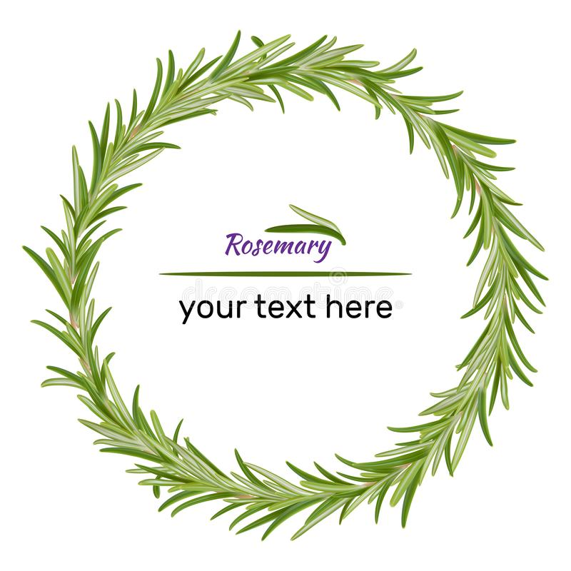 Guirnalda de las ramas del romero ejemplo del vector de hierbas libre illustration