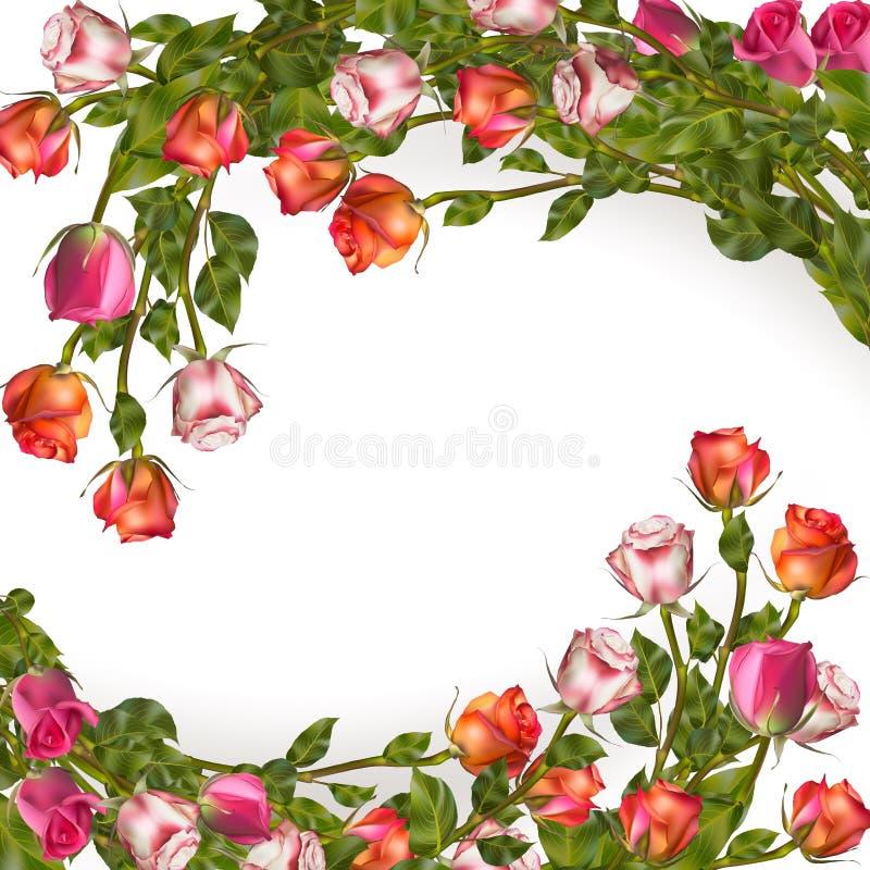 Guirnalda de las rosas en blanco EPS 10 libre illustration
