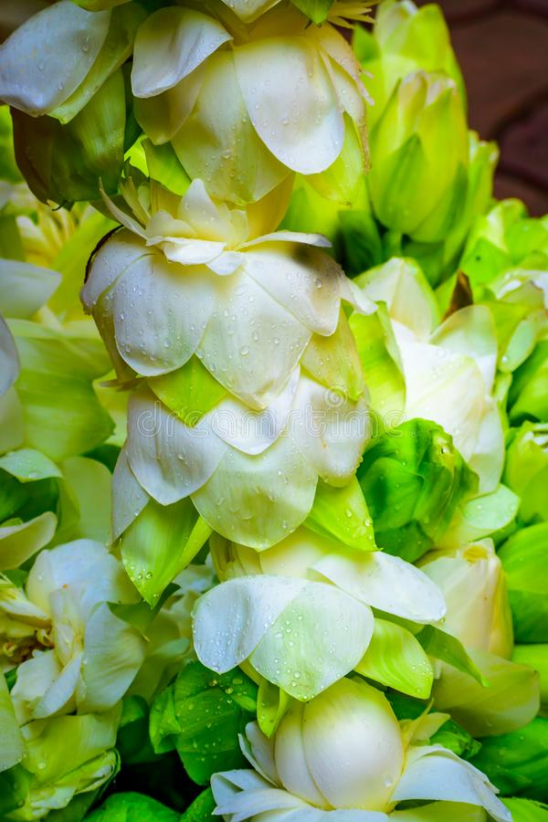 Guirnalda decorativa de la ejecución con la flor blanca y roja Concepto de las ramas y de las decoraciones de árbol de navidad fotografía de archivo libre de regalías