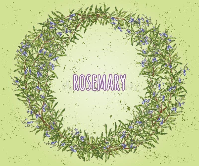Guirnalda del romero Marco floral ilustración del vector