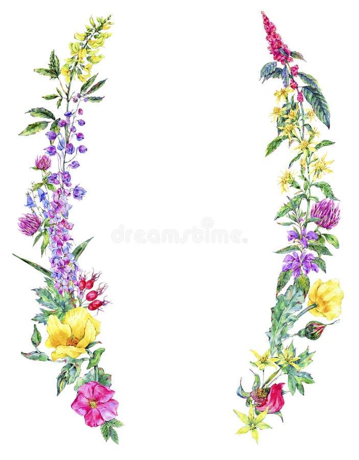 Guirnalda floral medicinal del verano de la acuarela, planta de los Wildflowers stock de ilustración