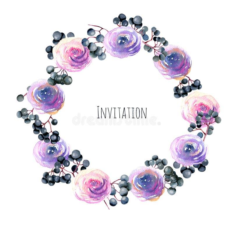 Guirnalda, frontera del marco con rosa de la acuarela, rosas púrpuras y ramas de la baya del saúco, pintadas a mano en un fondo b ilustración del vector