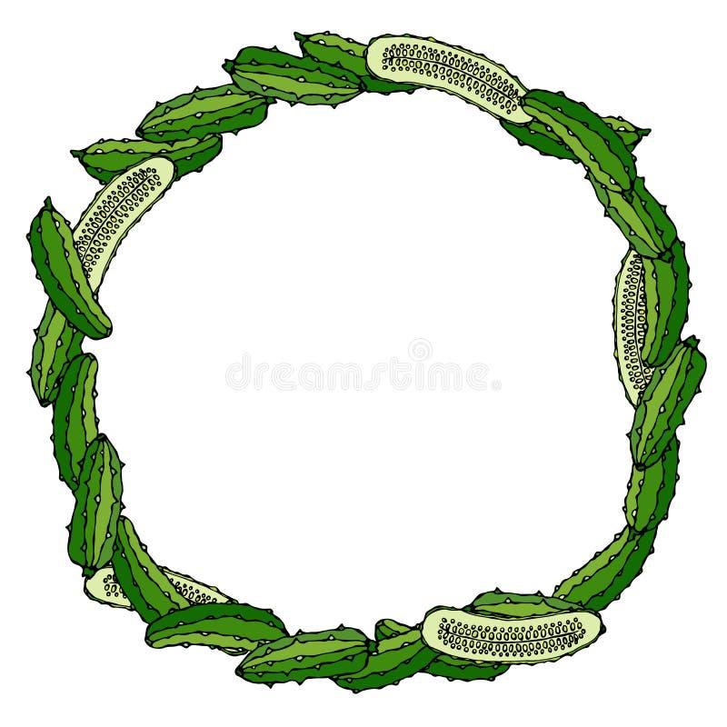 Guirnalda o marco redondo con los pepinos o pepinillo y mitad verdes de pepinos Verdura madura fresca Menú vegetariano sano Mano  ilustración del vector