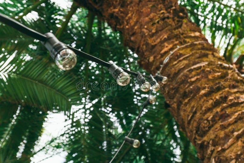 Guirnalda retra de los bulbos en una palmera, una boda tropical o decoraciones del partido del verano imagen de archivo