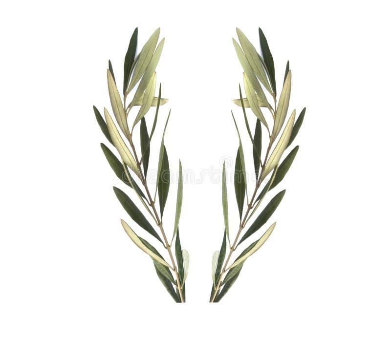 Guirnalda verde oliva de la rama de olivo imagenes de archivo