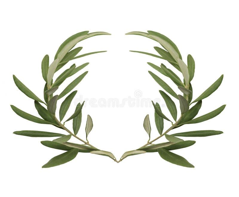 Guirnalda verde oliva - la recompensa por los ganadores de los Juegos Olímpicos en Grecia antigua fotos de archivo