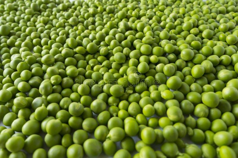 Download Guisante Verde Fresco En La Vaina En El Fondo Blanco Imagen de archivo - Imagen de gastrónomo, grupo: 100527587