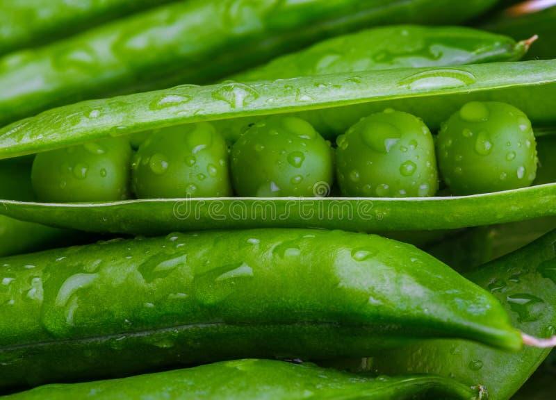 Guisantes verdes, blandos, muy fresco con descensos del agua y crudo imagen de archivo