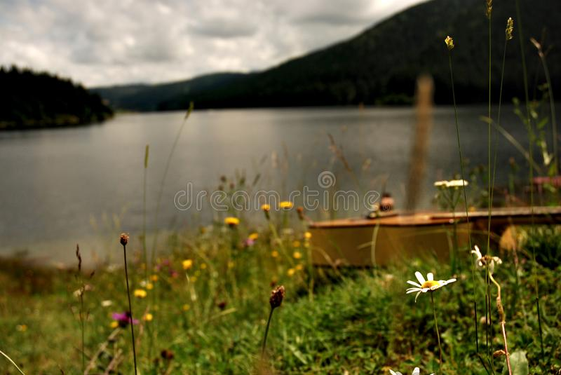Guitar lying in the grass by a mountain lake royalty free stock photo
